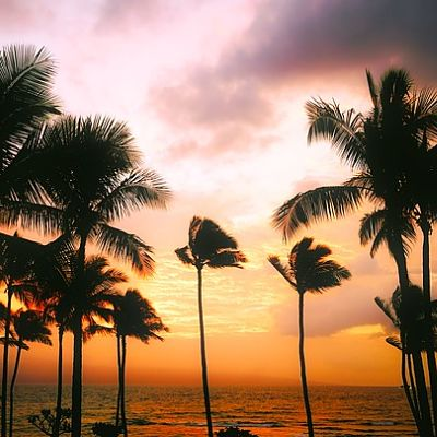 sultry paradise